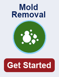 mold remediation in Local TN